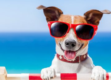 HVAC Services in Roswell Share Tips for Keeping Your Pets Cool