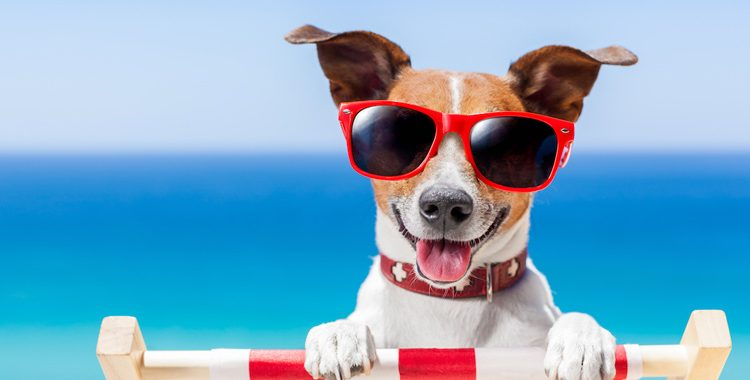 What's more fun than spending time outdoors with your kids and your favorite pet? However, while your furry friends may look perfectly happy lounging..