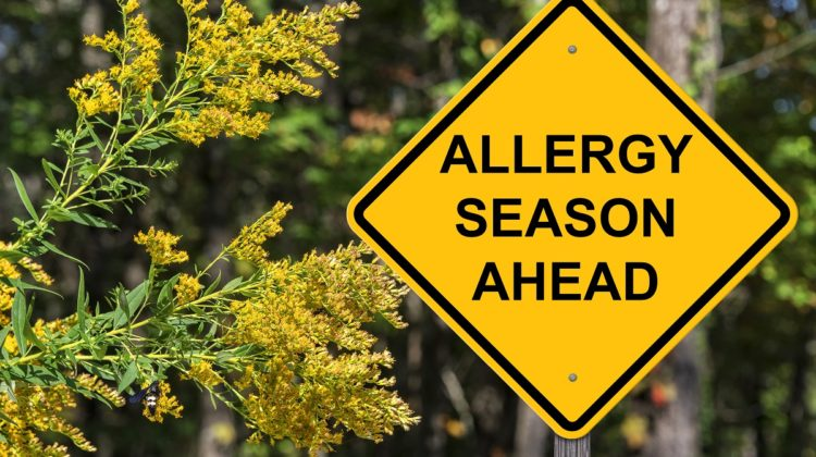 Taking Fall On With HVAC Repair Services in Milton People suffering from fall allergies may start to feel more than a little uneasy as the leaves begin to change their colors. This is not surprising since autumn brings its own set of challenges, especially to those who are sensitive to mold and ragweed pollen. Yes, […]